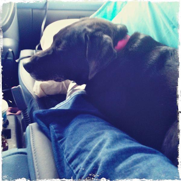 Car Ride 1